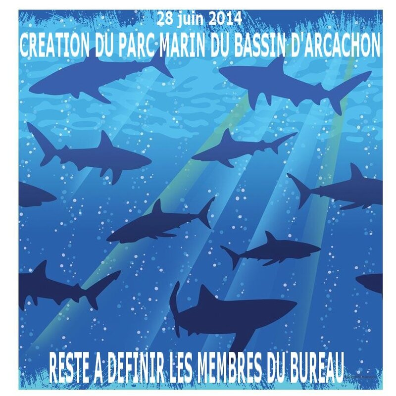 nappe-grand-requin-R1-174780-1