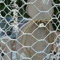 Le monde à l'envers CHAT en cage
