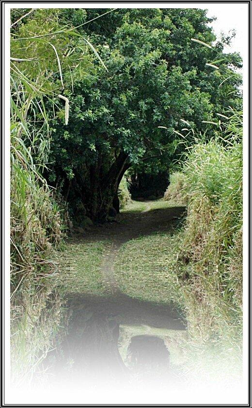 RUISSEAU DERRIERE CHEZ MOI (FIN) à RDM LES BAS Réunion - Chanson Réunion - Humour - Poésie - Recette