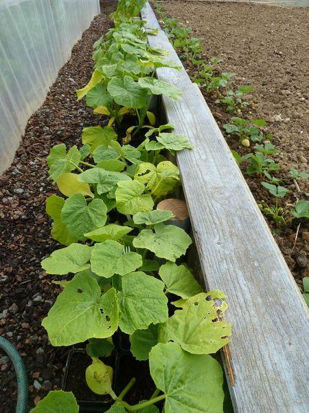 9-plantes potagères (6)