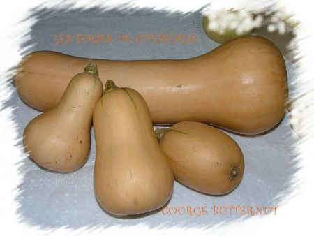 Légumes d'hiver 6