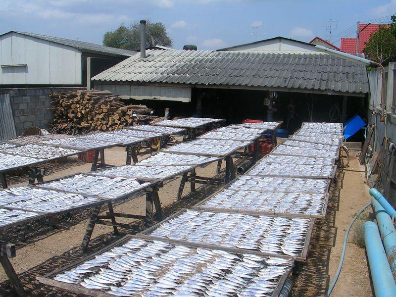séchage des filets de poisson