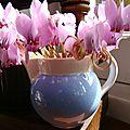 Mini cyclamens dans un pot à crème en faïence craquelée bleue