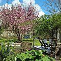 Windows-Live-Writer/Joli-printemps-au-jardin-_601C/20170402_133710_2