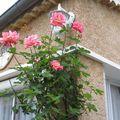 rosier 5