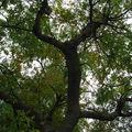 IMG_5688 sous l'arbre !!