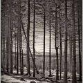 Forêt et neige