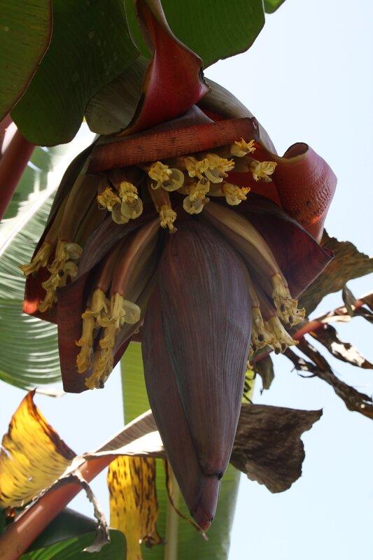 le musée de la banane à sainte marie - la cuisine et les voyages