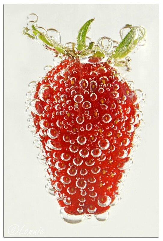 Macro_fraise_12