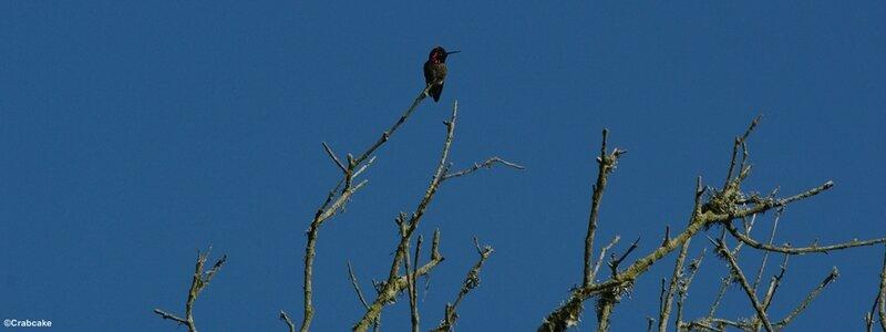 Colibri Presidio San Francisco