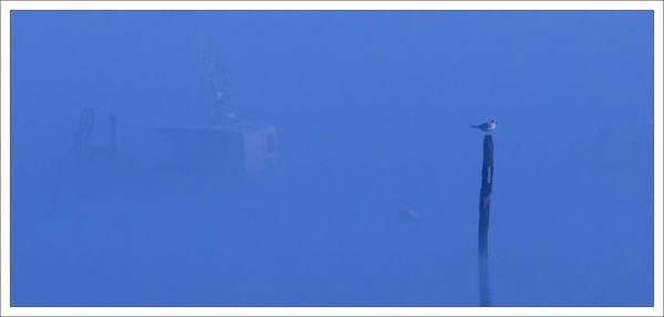 Pave bateau barque mouette matin brume 061212