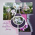 Orchidées de jersey
