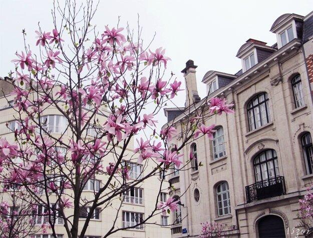 13zor-bruxelles-printemps2014_1