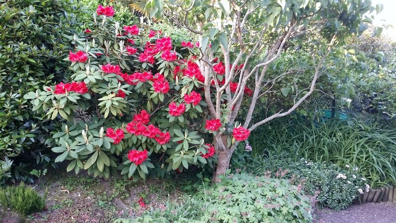 16 06 07 21h07 Rhododendron