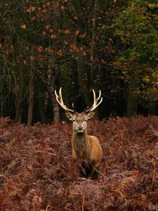 animal-buck-deer-forest-lovely-Favim