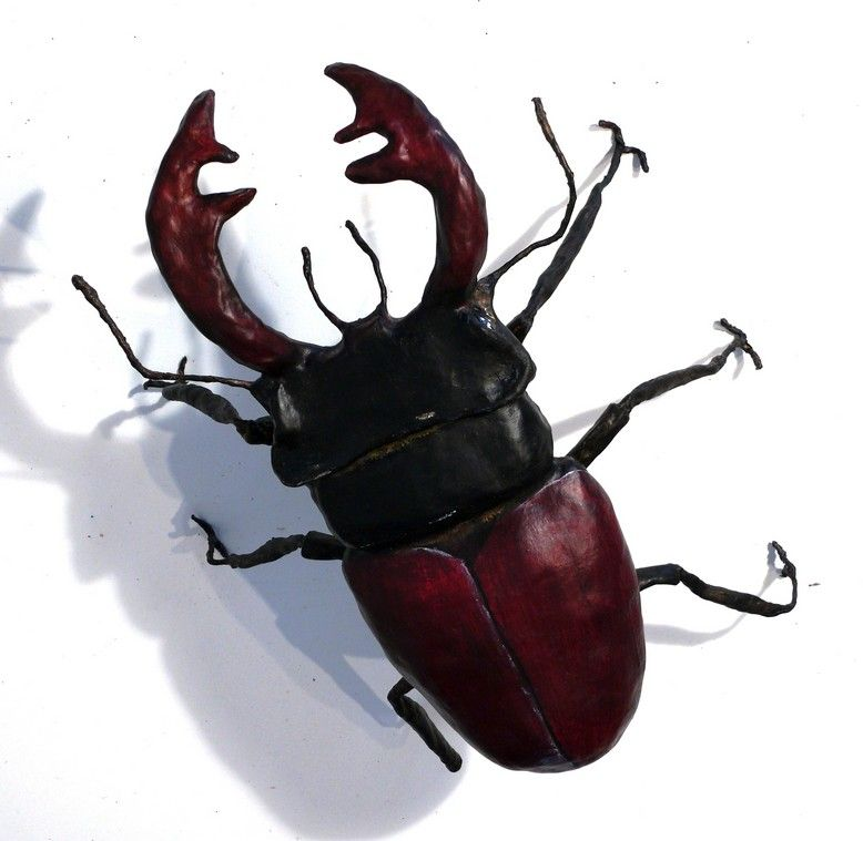 Insectes tous les messages sur insectes martha arango for Ame atelier du meuble environnemental inc