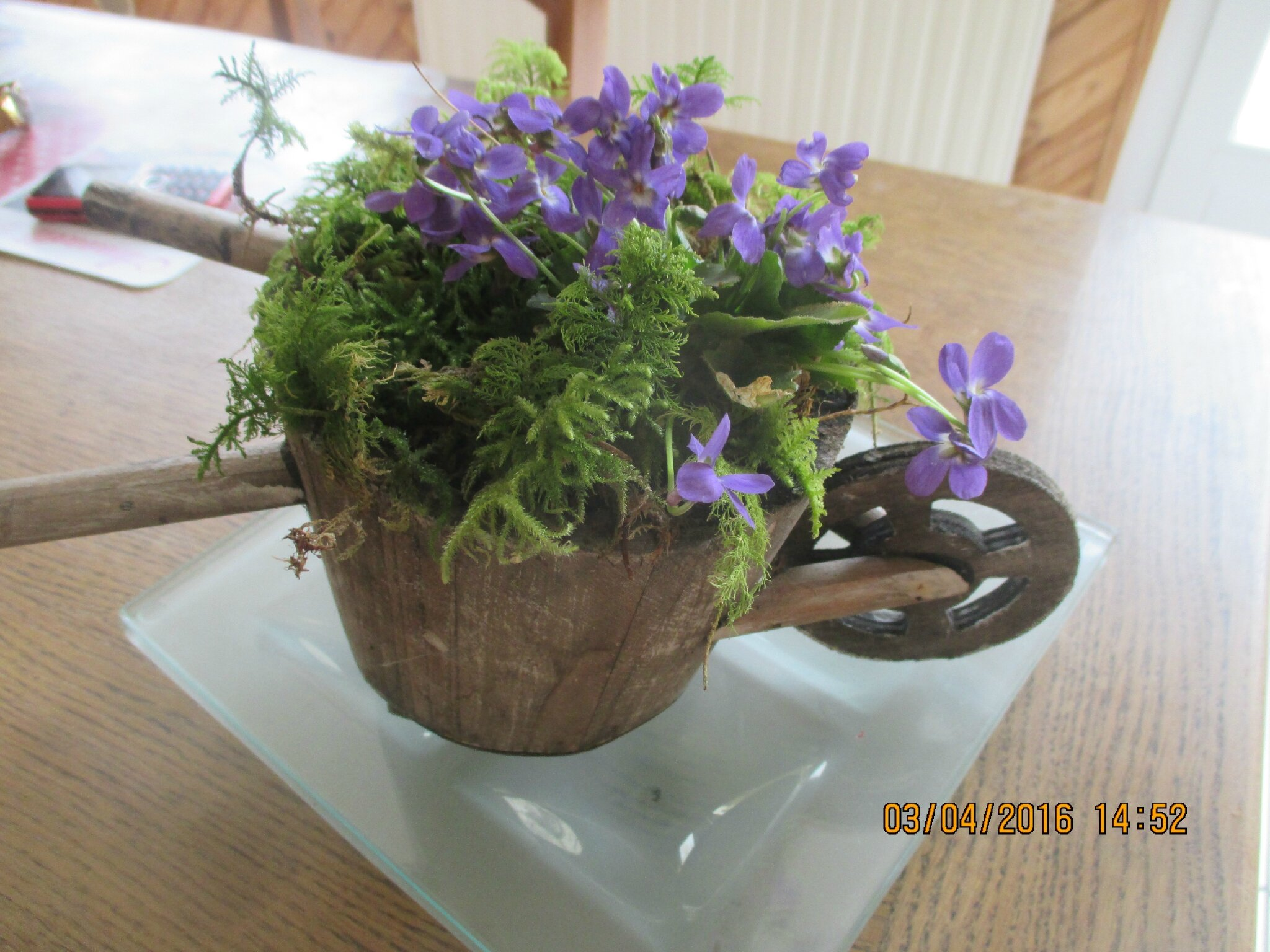 petit bouquet de violettes,pour vous souhaitez une bonne soirée,et une bonne semaine ,grosses bises à tous et toutes♥