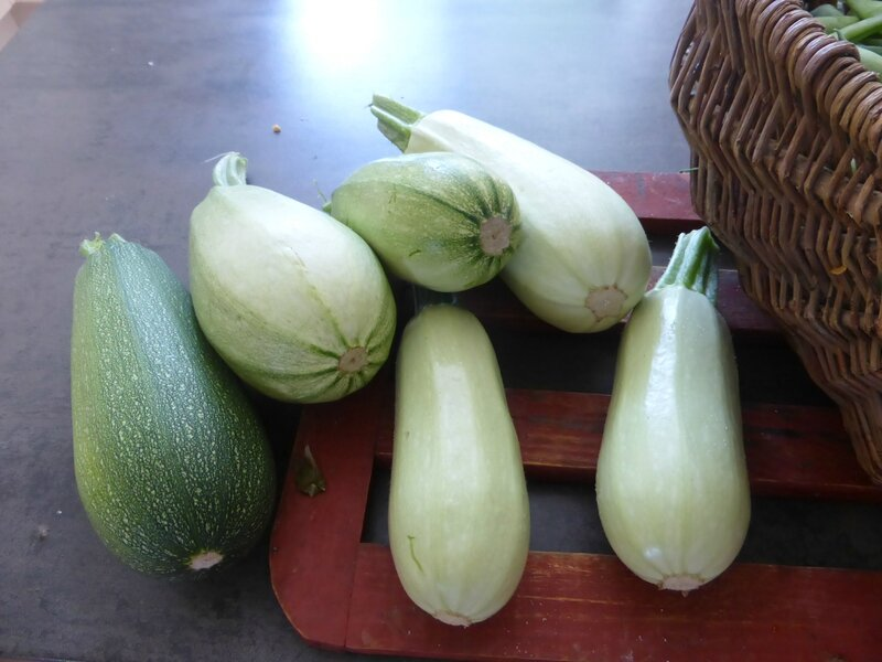 28-courgettes