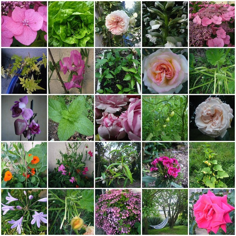 jardin juillet2014