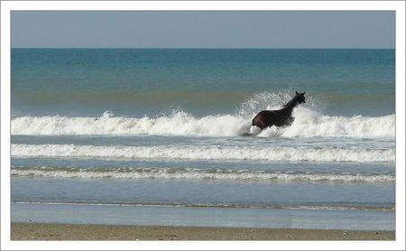 cheval_grosse_vague