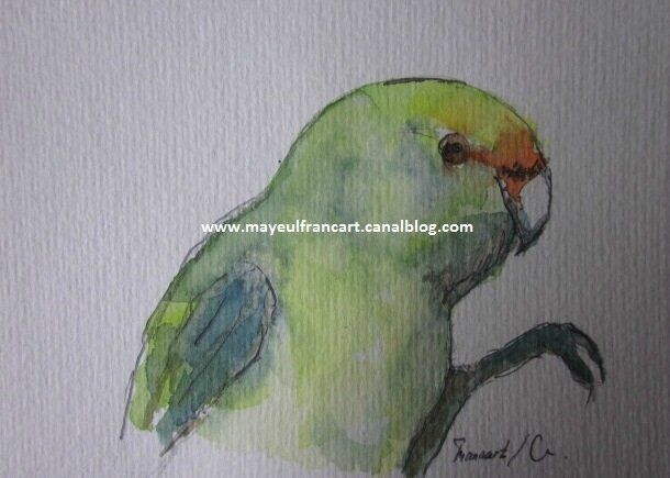 Le perroquet vert