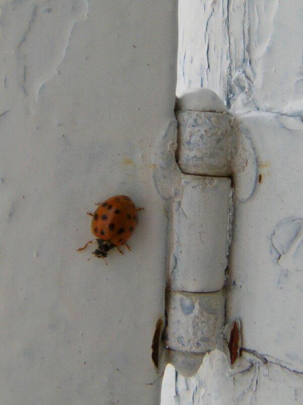 ®pimp ta life 2014 spider (1)