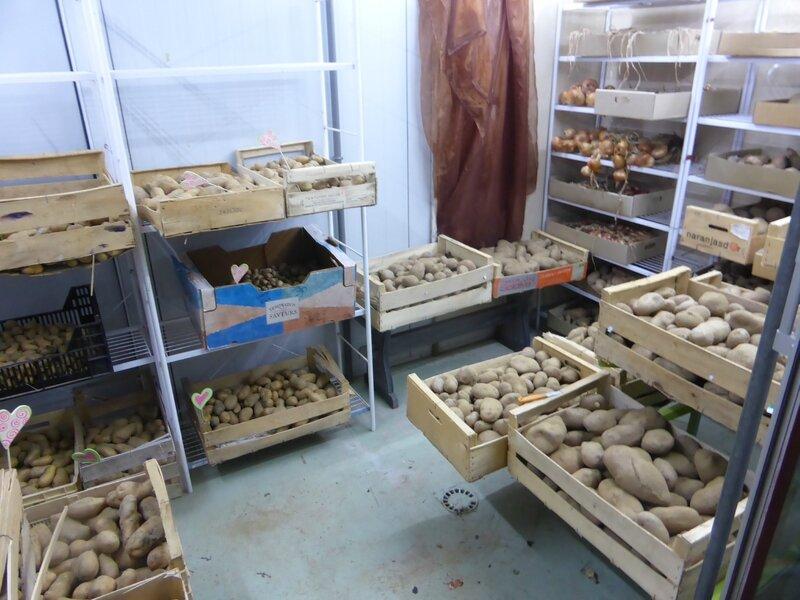 9-pommes de terre (7)