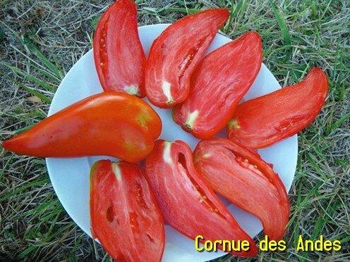 cornue des andes