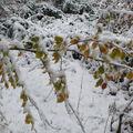 2008 10 29 Branche au couleurs d'automne sous la neige