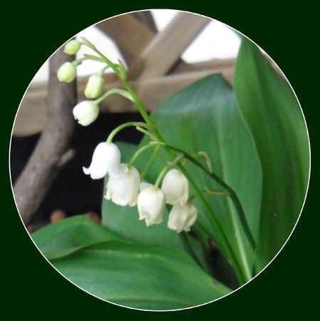 Muguet - Avril 2012-Miss Butterfly