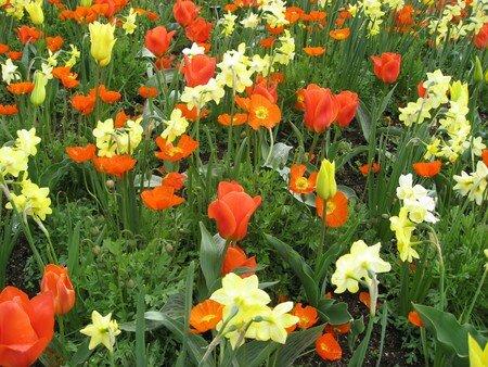 fleurs_en_vrac