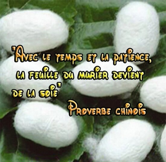 proverbe chinois-murier-soie
