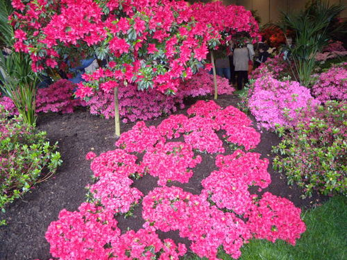 Floralies 065