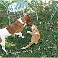 Chien et chat (jak)
