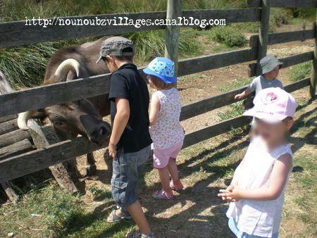 cactus10072012-4blog