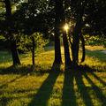Coucher de soleil vert