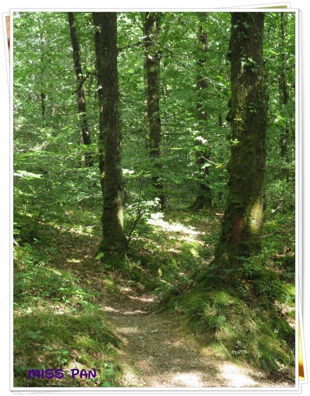 foret (2)