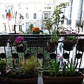 Fenêtres et jardinières