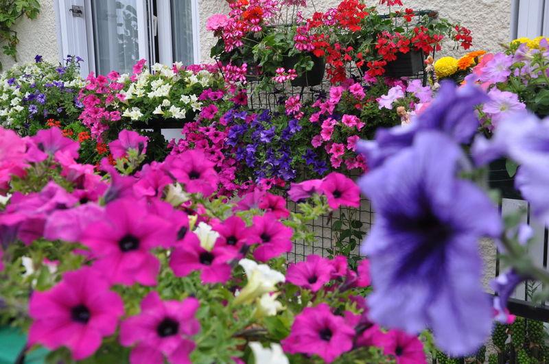 jardins fleuris 0340035