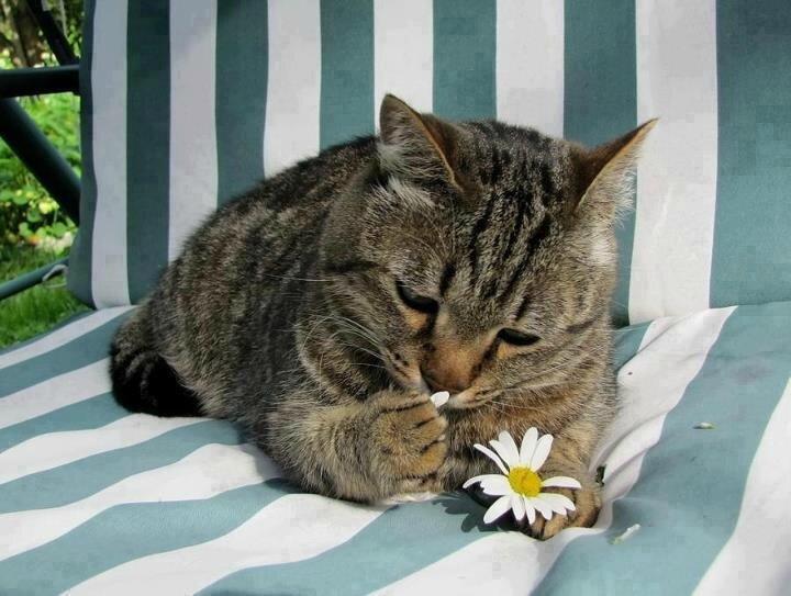 chat fleur valentin