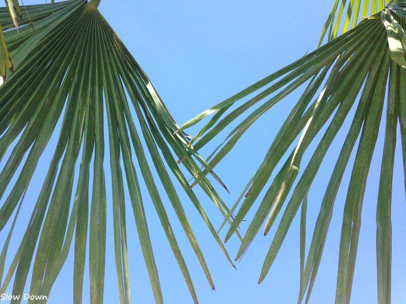 ombre des palmiers