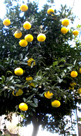 yellow_4