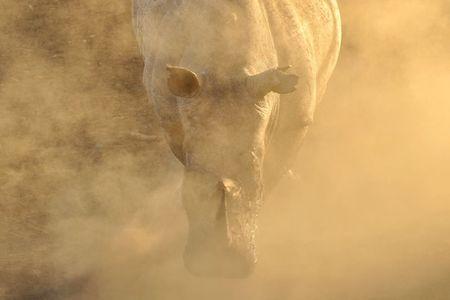 Afrique du Sud (247)