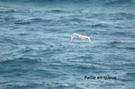 DSC03995_Paille_en_queue_3_MOD