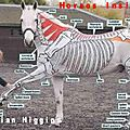 Inside out horses : anatomie du cheval