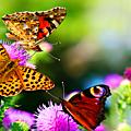 Nature et vie naturelle