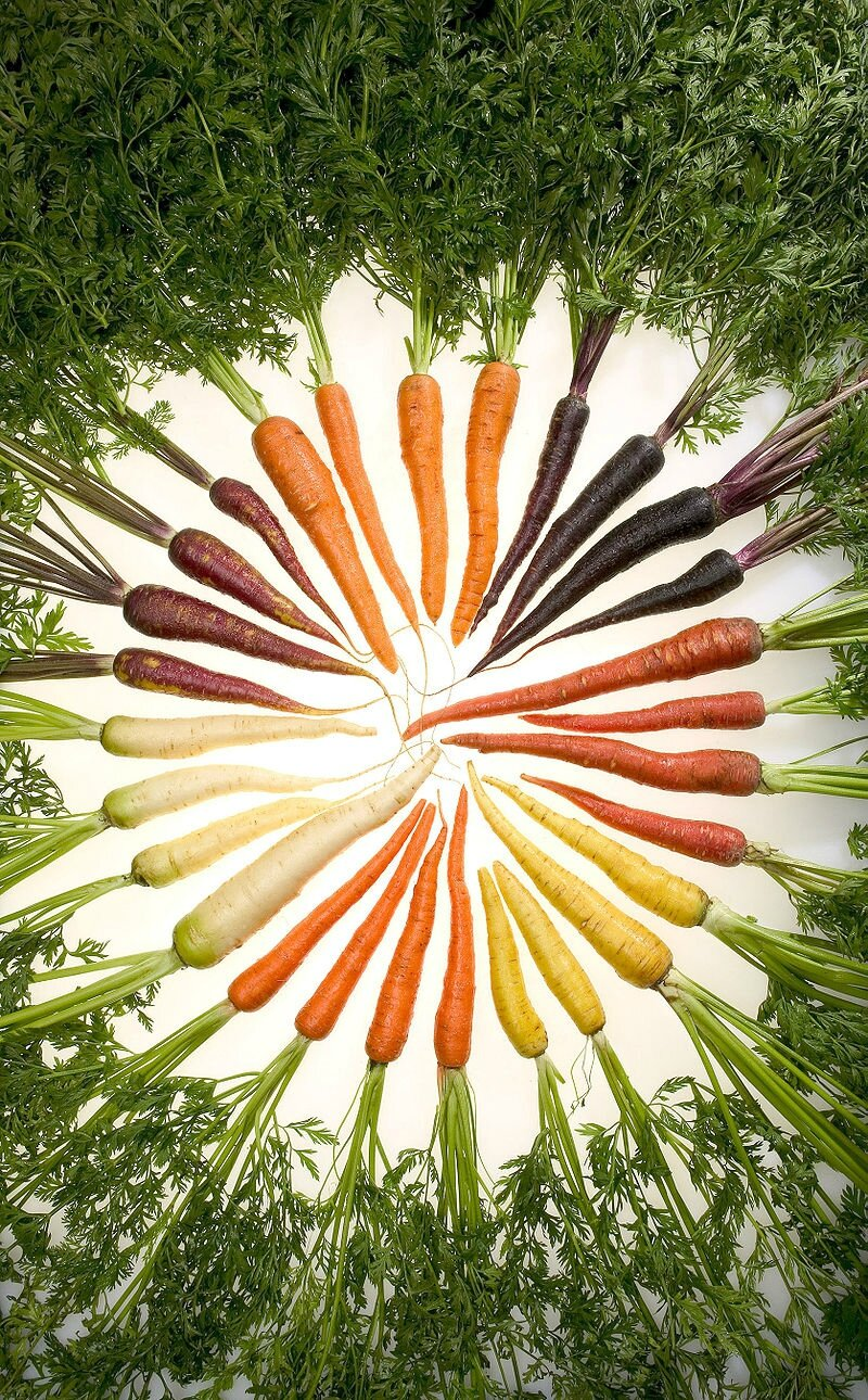 800px-Carrots_of_many_colors