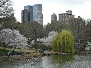Central Park lac saule pleureur