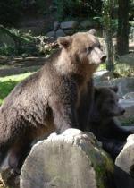 parc-animalier-des-pyrenees