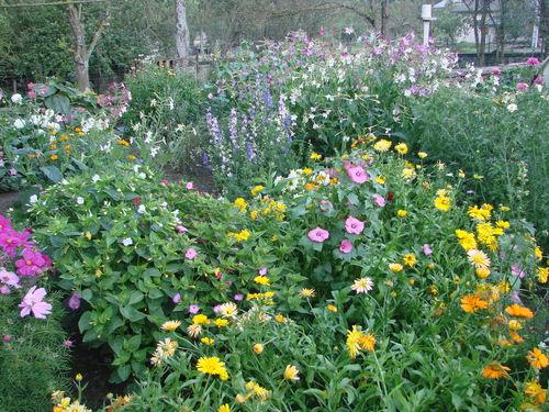 2008 09 04 Les fleurs de mon jardin